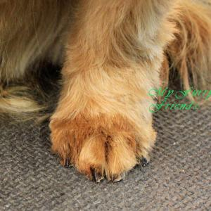 how to cut a dogs nails that are over grown