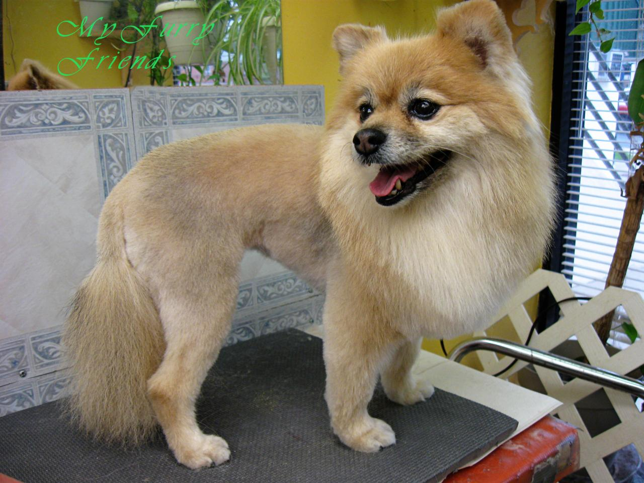 My Furry Friends Dog Grooming