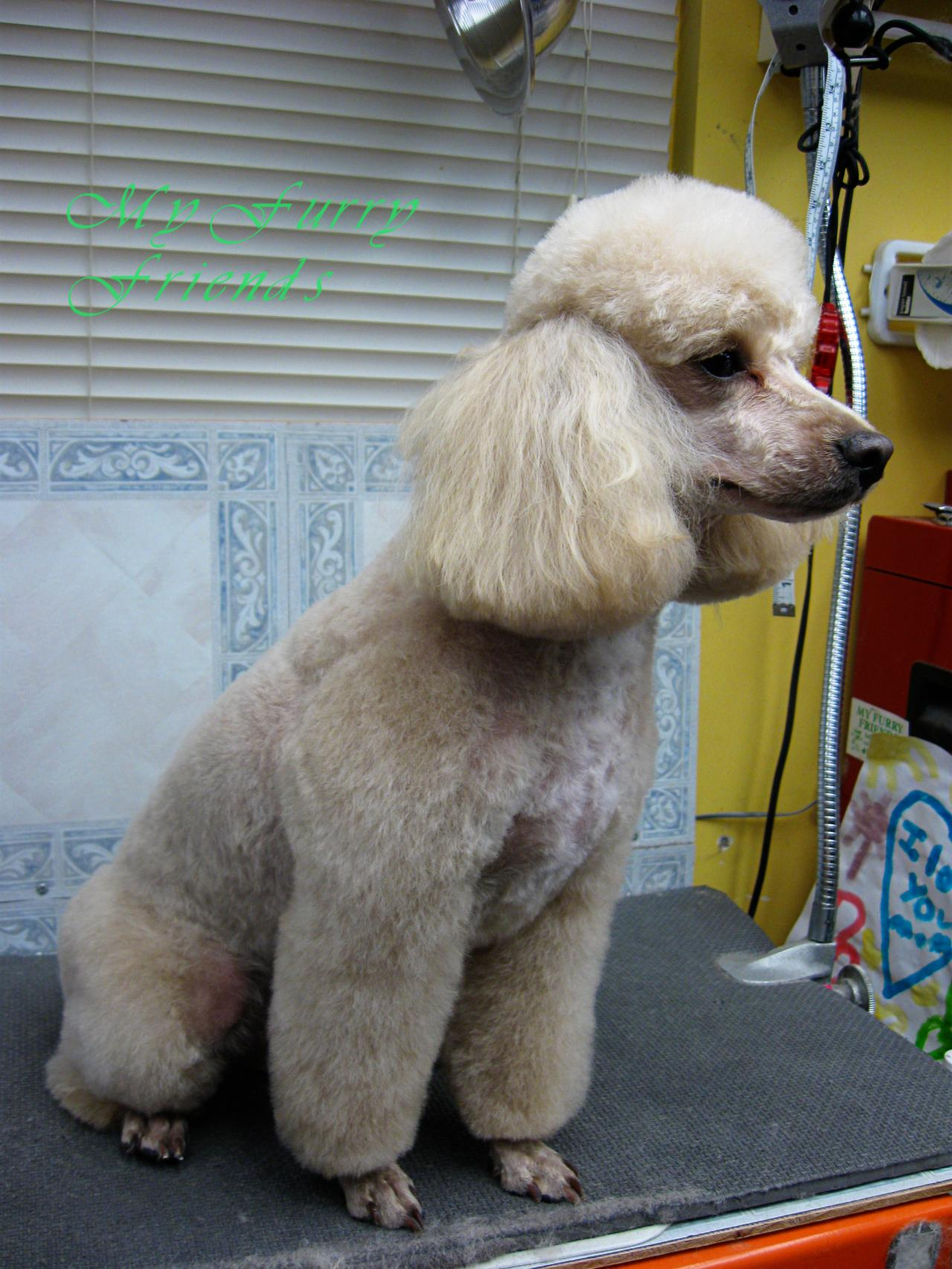 Furry friends dog grooming